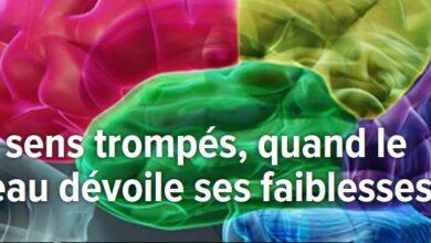 Photo of Les sens trompés, quand le cerveau dévoille ses faiblesses.